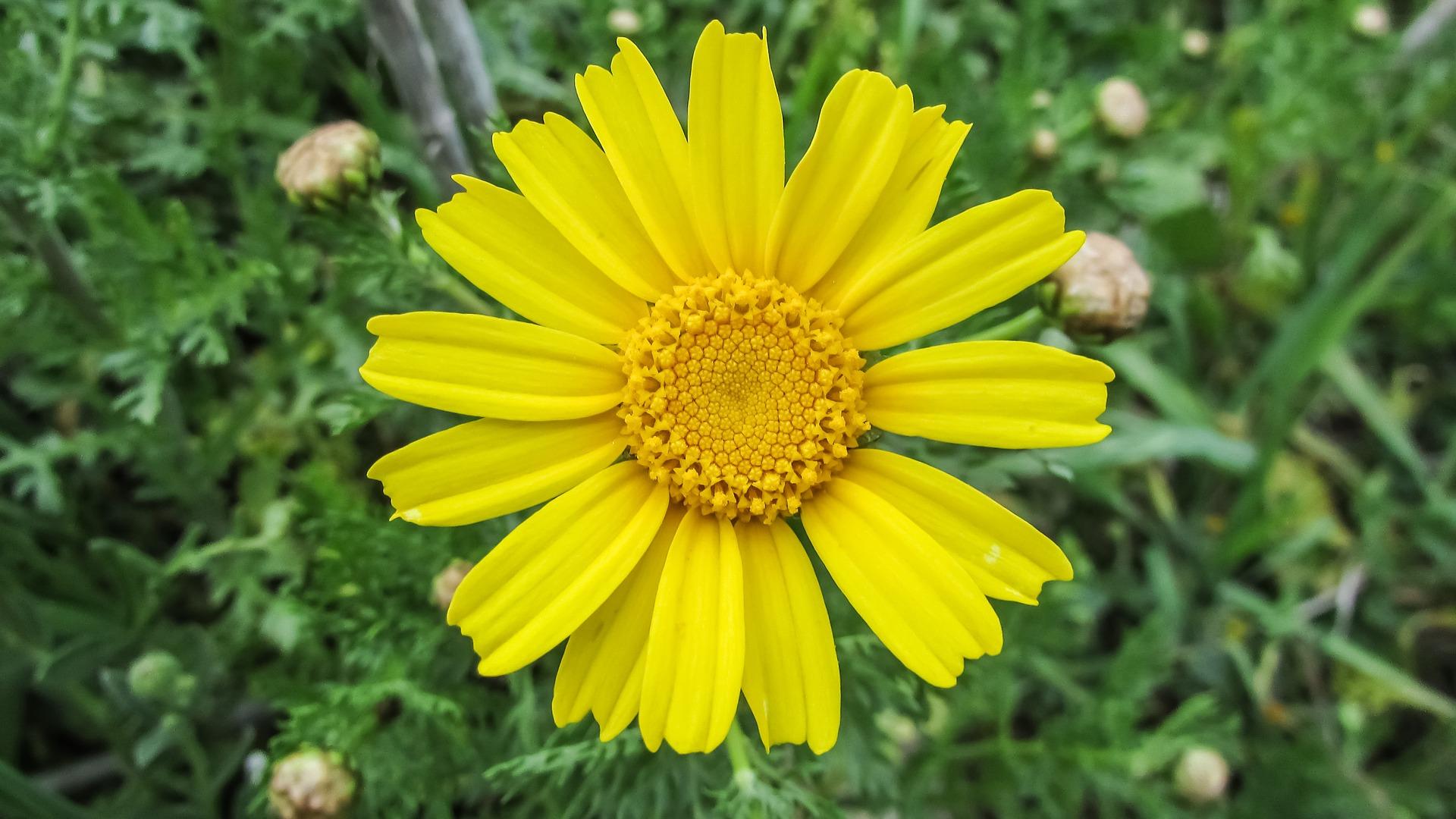 Heilpflanzenkunde: A wie Arnika