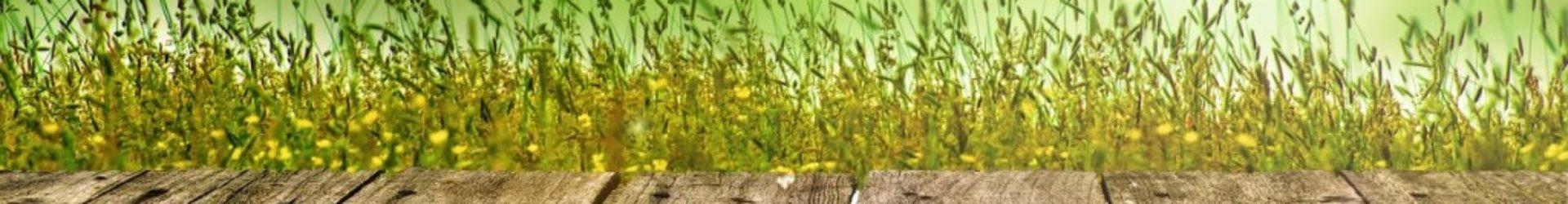 Schlagwort: Aloe Vera Harz