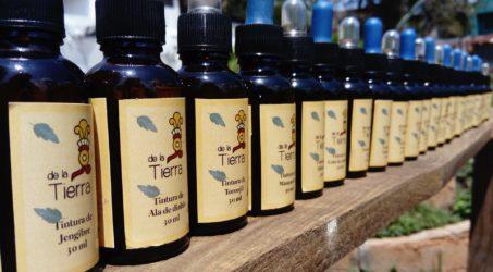 Johanniskraut – Tinktur und Öl selber herstellen